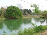 Beautiful walking area along the river near Hirapur, India.