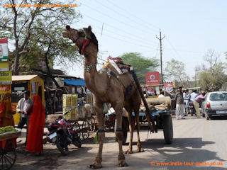 Ways of getting to Fatephur-Sikri - perhaps not.