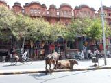 Jaipur's lovely buildings - in Pink