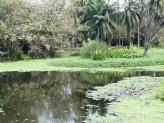 Botanical Gardens pond, Kolkata, India.